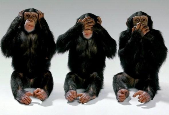 Image result for monkey see monkey do learnt behaviour